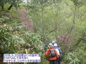 アカヤシオ (2).JPG