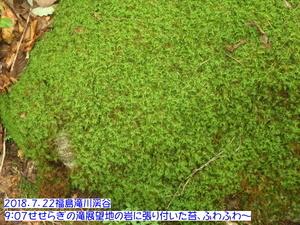 コケ(渓谷).JPG