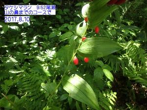 タケシマラン.JPG