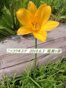 ニッコウキスゲ (4).JPG