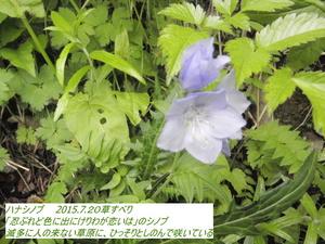 ハナシノブ.JPG