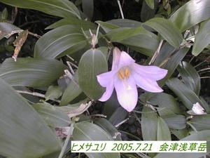 ヒメサユリ.jpg