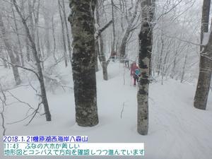ブナ八森山.JPG