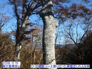 ブナ男体山.JPG