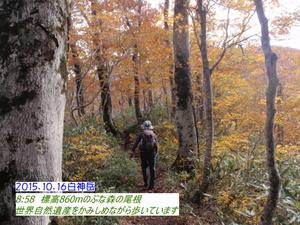 ブナ白神山.JPG