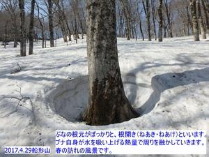 ブナ船形山冬.JPG