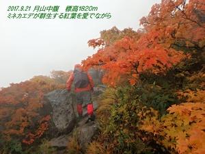 ミネカエデ 月山中腹.JPG