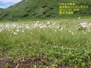 ワタスゲ (2).JPG